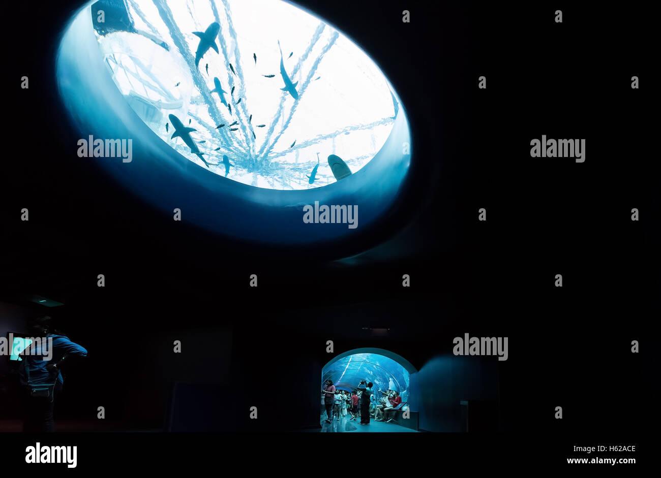 S.E.A. Aquarium in Singapore Stock Photo