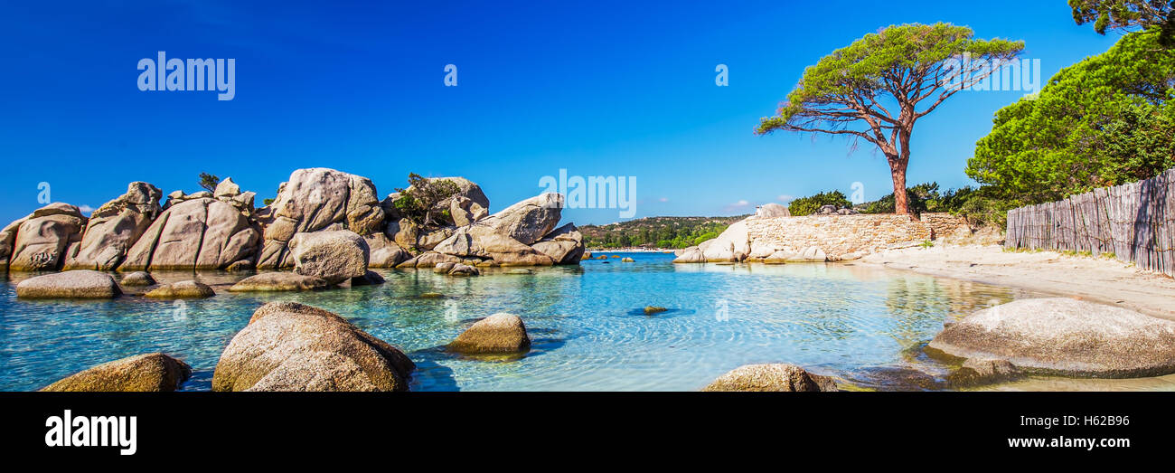Famous pine tree on Palombaggia beach with azure clear water and sandy beach on the south part of Corsica, France - Stock Image