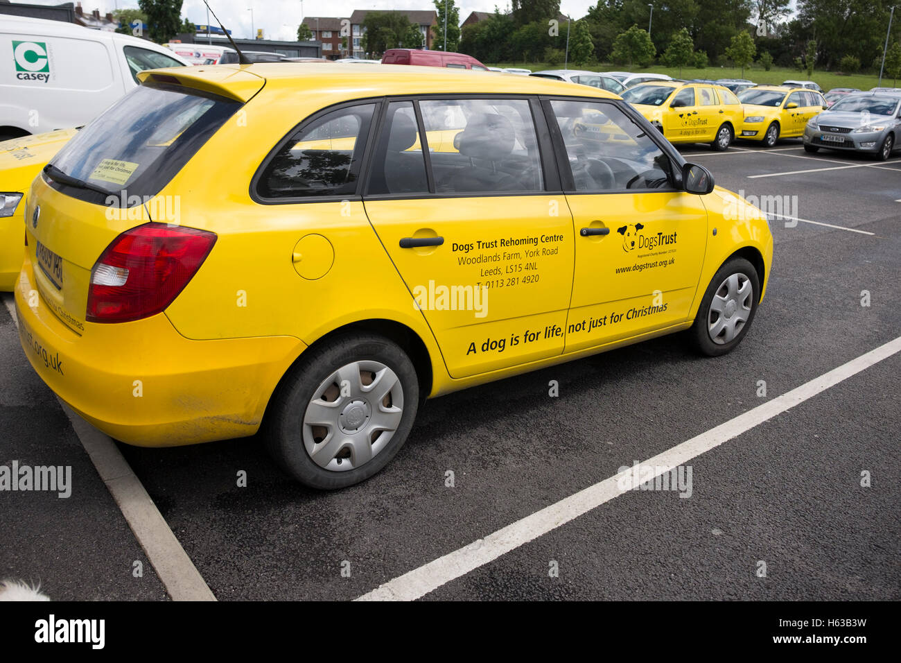 Dogs Trust Car Yellow Charity - Stock Image