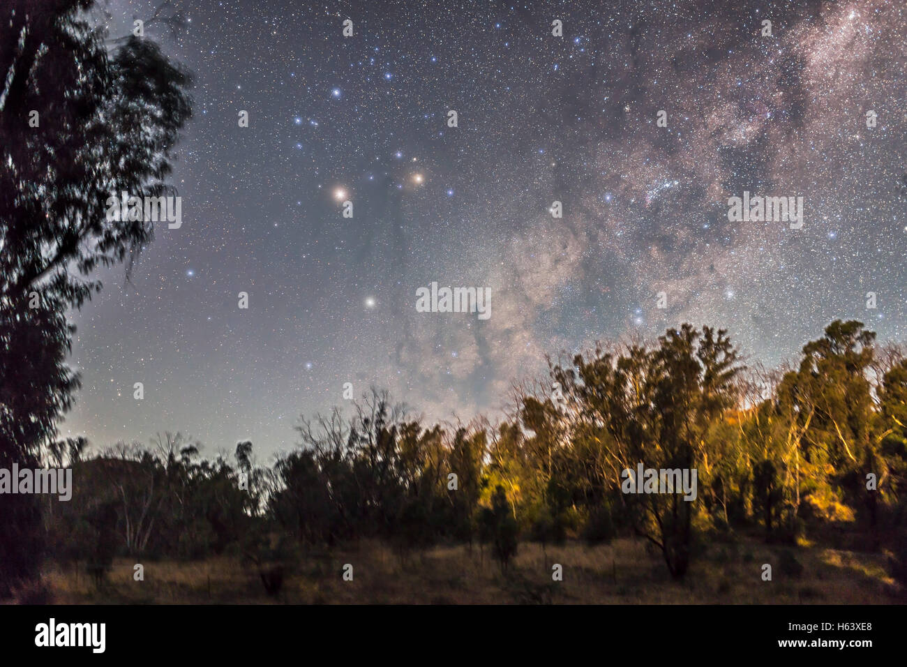 Scorpius rises in the east as the last moonlight illuminates the gum trees and sky from the setting waxing Moon Stock Photo
