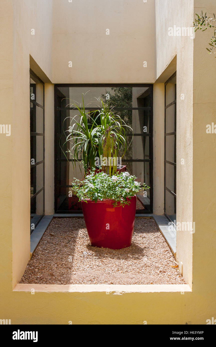 plants in large plant pot in small enclosed space - Stock Image