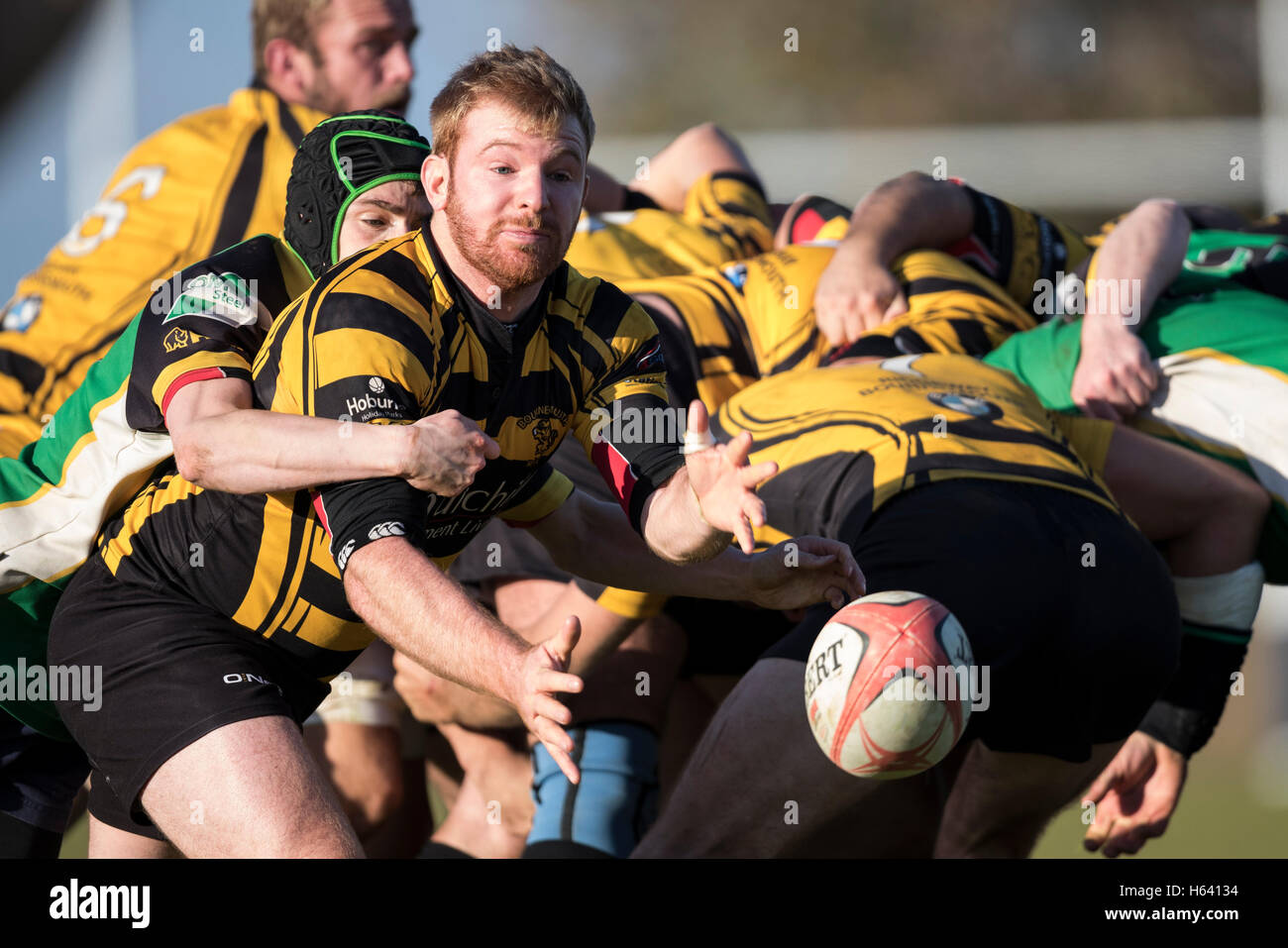 North Dorset RFC 2nd XV vs Bournemouth III XV - Dorset, England. Bournemouth scrum half in action. - Stock Image