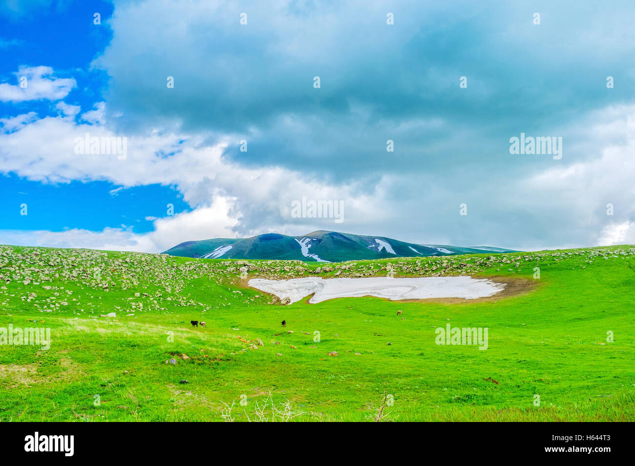 The dusty snowfield on the green meadow in highlands of Gegharkunik Province, Armenia. - Stock Image