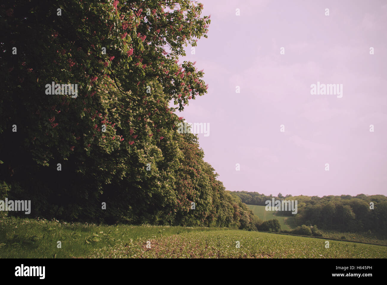 View over the Chilterns landscape in Buckinghamshire, England Vintage Retro Filter. - Stock Image