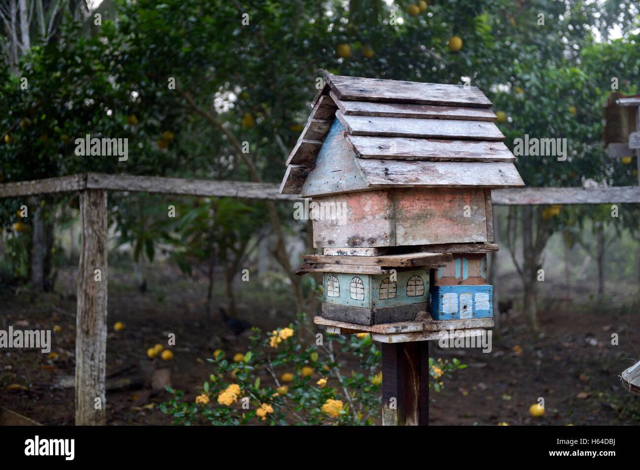 Brazil, Para, Trairao, Amazon rainforest, Agrarian Reform Areia, apiary Stock Photo