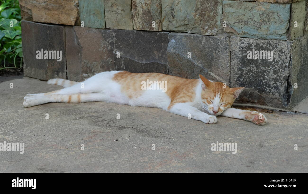 Cat sleeping with its limbs stretched out - Stock Image