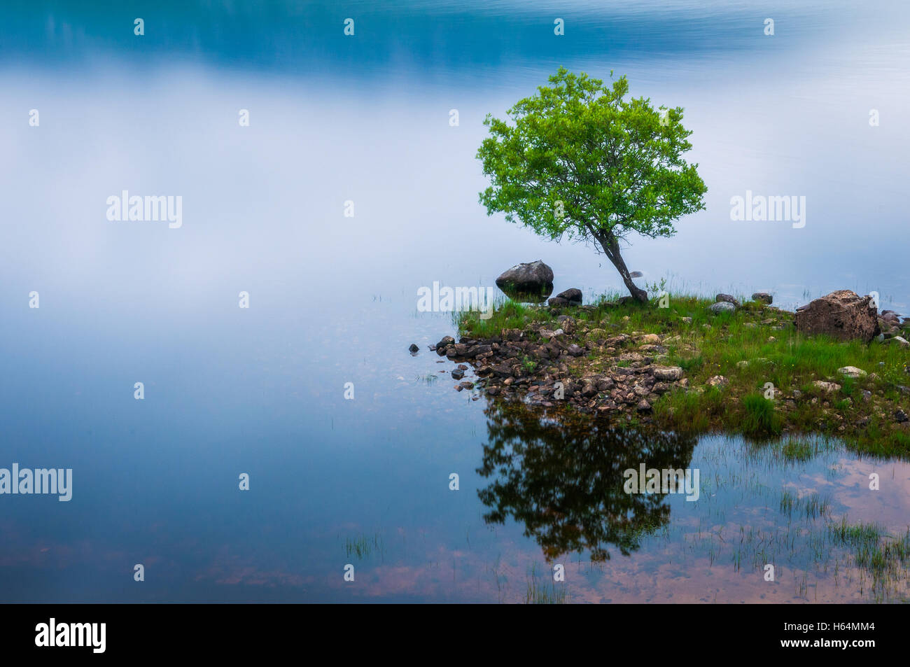 Tree in Dunlewey lough, Donegal, Ireland - Stock Image