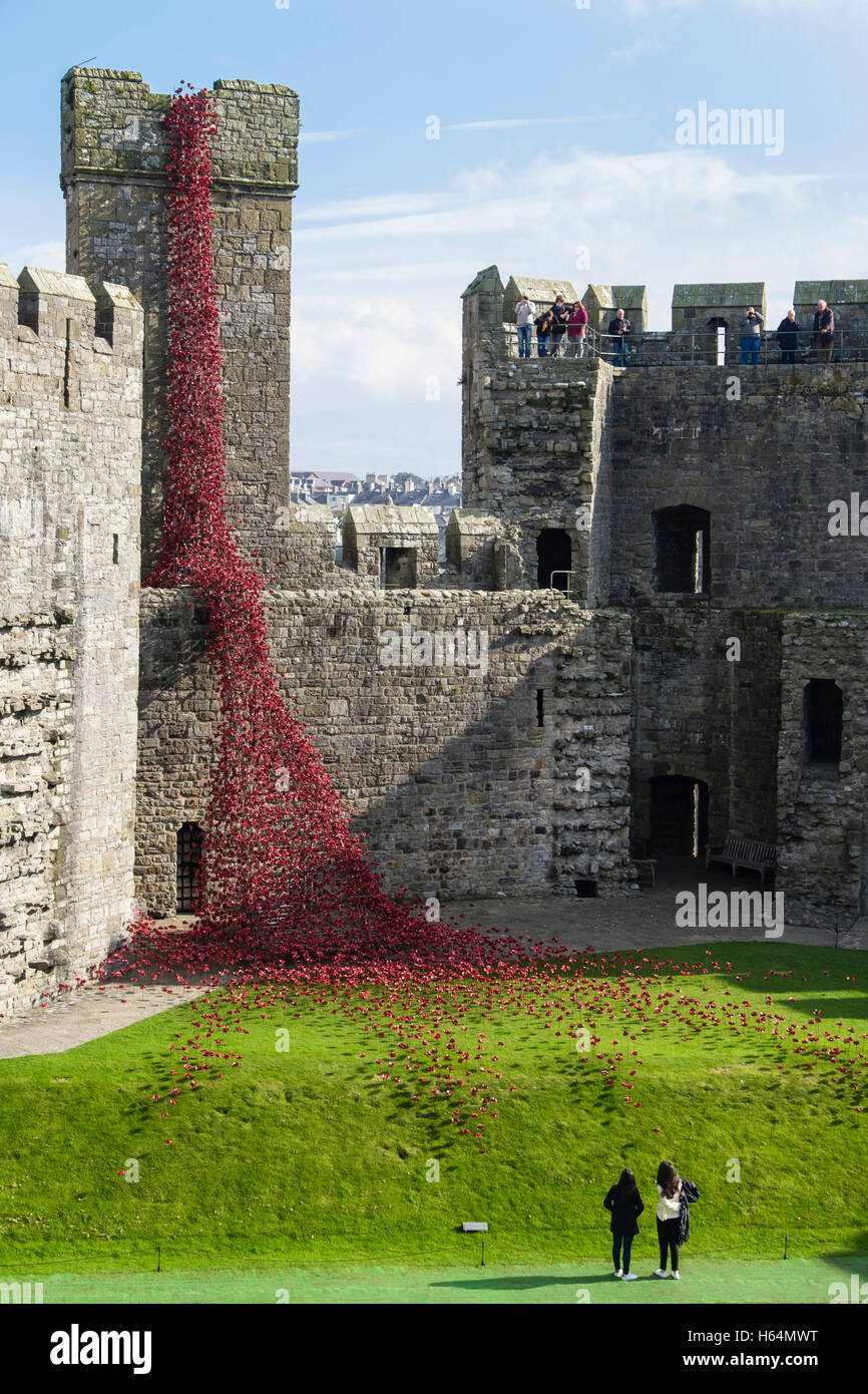 Visitors look at Weeping Window art sculpture of ceramic red poppies display in Caernarfon castle walls. Caernarfon - Stock Image