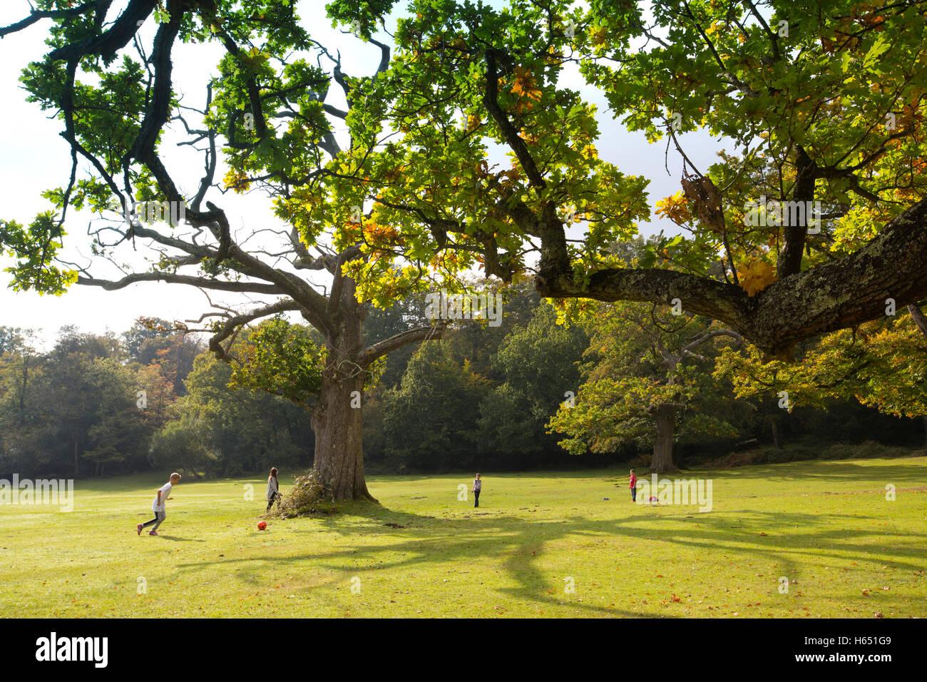 Swan Green, Emery Down, Lyndhurst, Hampshire, England, UK - Stock Image