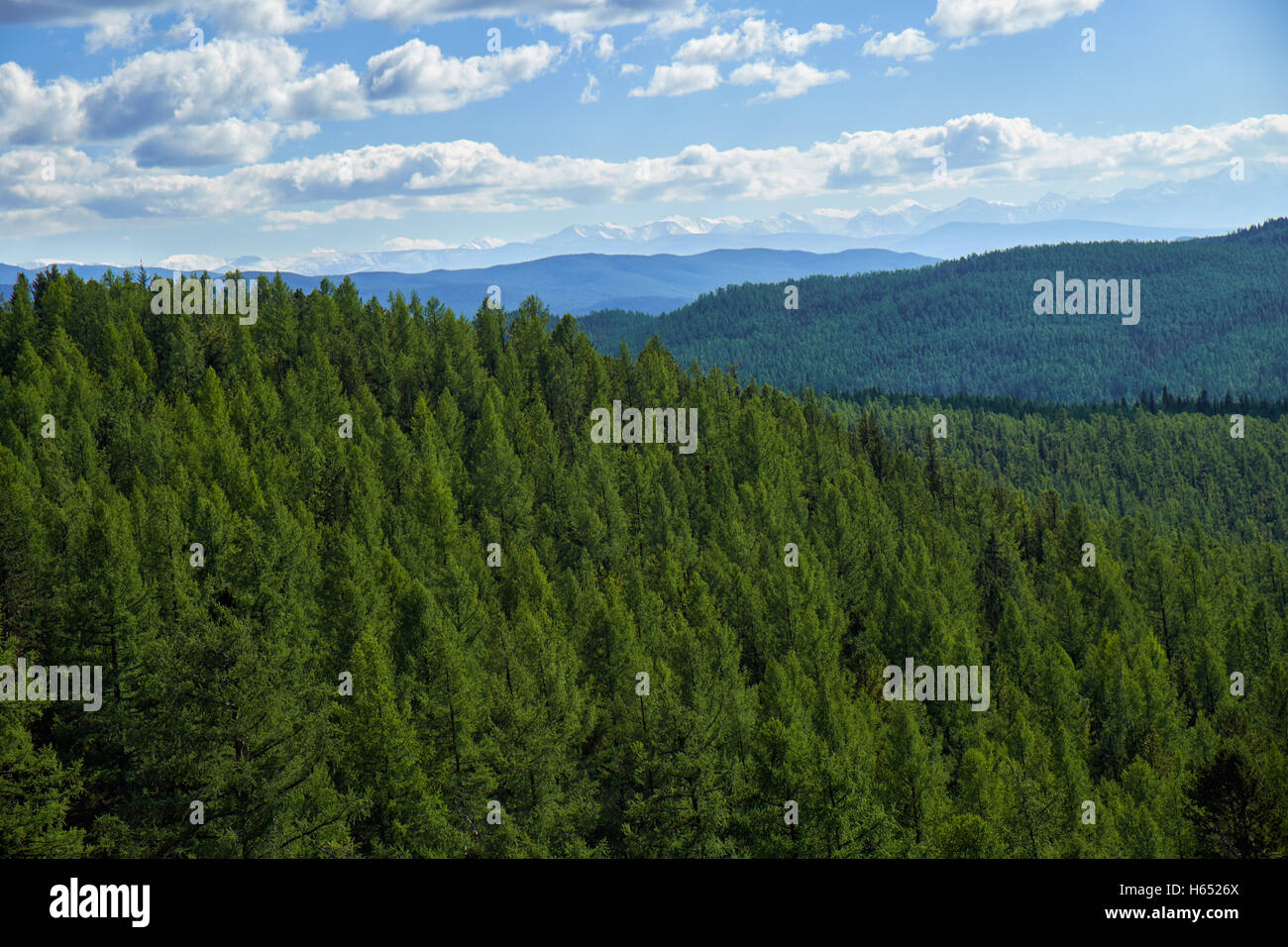 Altai mountains forest landscape in Ulagan Highlands. Siberia, Russia - Stock Image