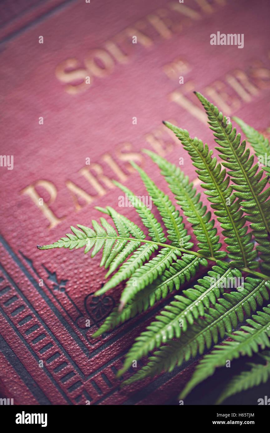 Fern with antique Paris souvenir book - Stock Image