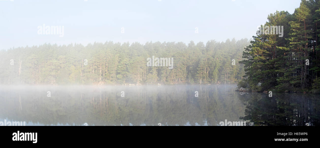 Loch Garten covered in early morning mist, Abernethy Forest, remnant of the Caledonian Forest in Strathspey, Scotland - Stock Image