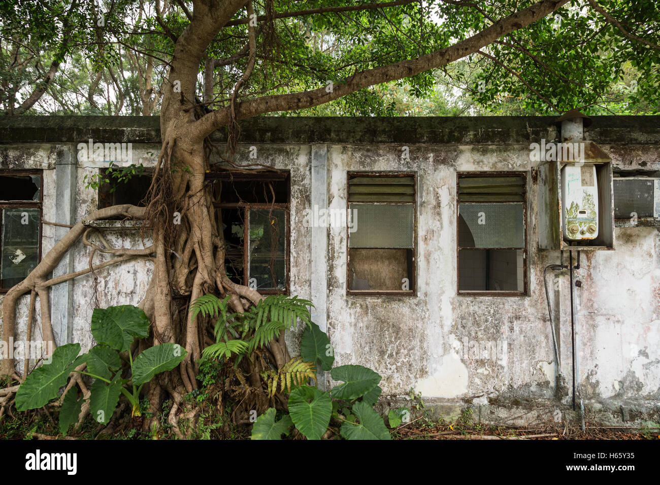 Tree and old, abandoned building near the Ngong Ping village on Lantau Island in Hong Kong, China, viewed from the - Stock Image