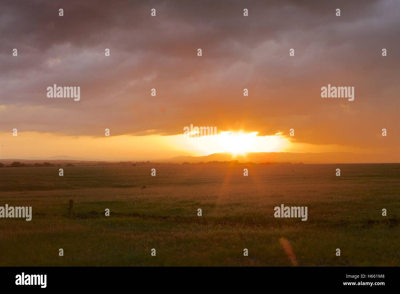 Sunrise on safari in Masai Mara, Kenya. - Stock Image