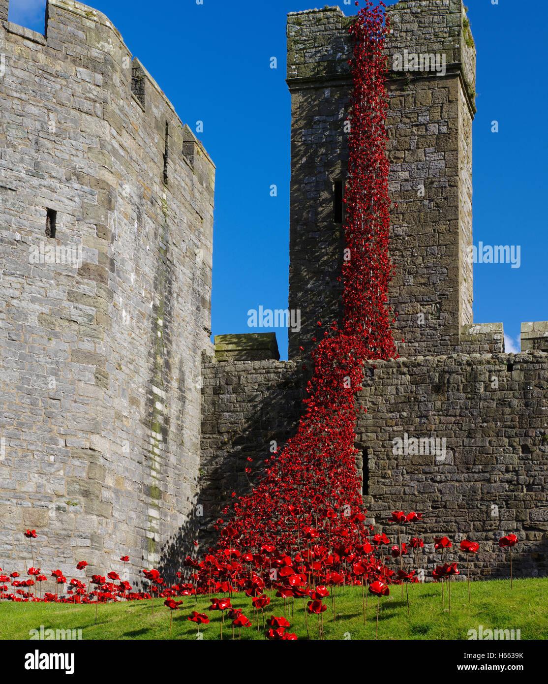 Weeping Window installation at Caernarfon Castle, Wales, - Stock Image