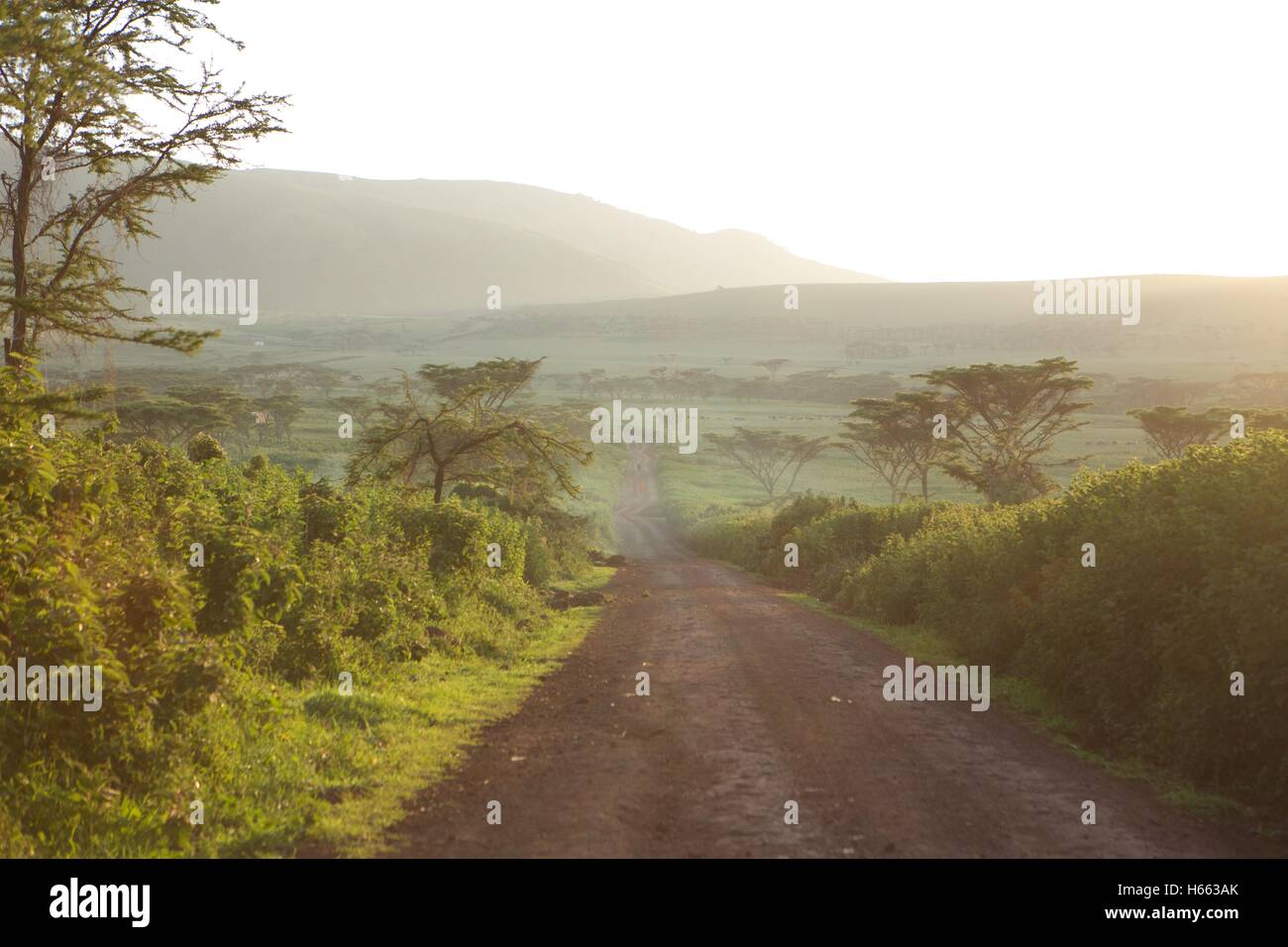 Backroads in the early morning on safari in Serengeti National Park, Tanzania. - Stock Image
