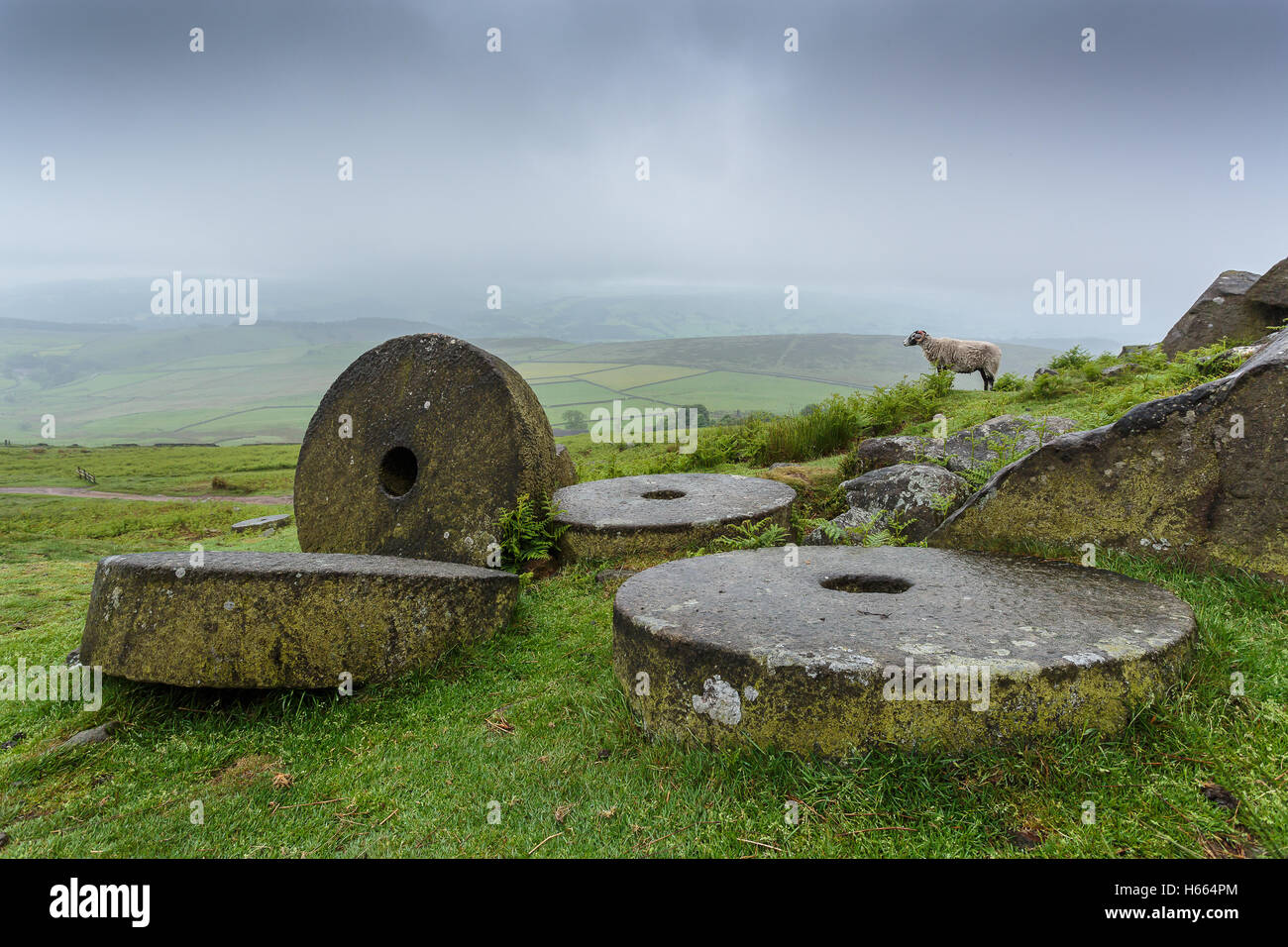 A lone sheep amongst the millstones at the popular climbing location of Stanage Edge - Stock Image