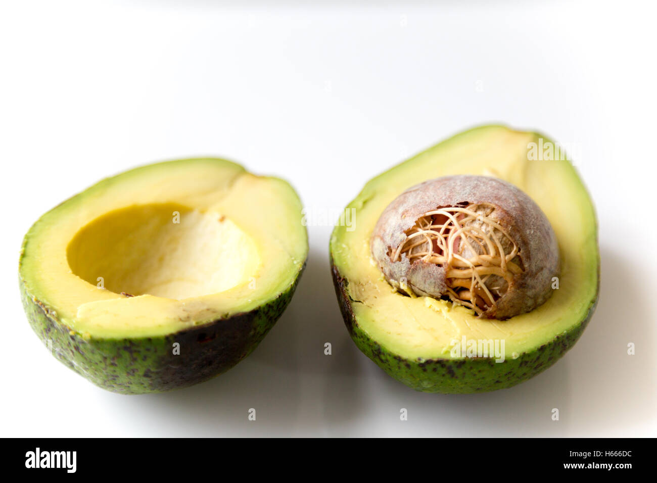 You Look Like An Avocado Quote: Brazilian Avocado (Portuguese: Abacate) Split Fruit With