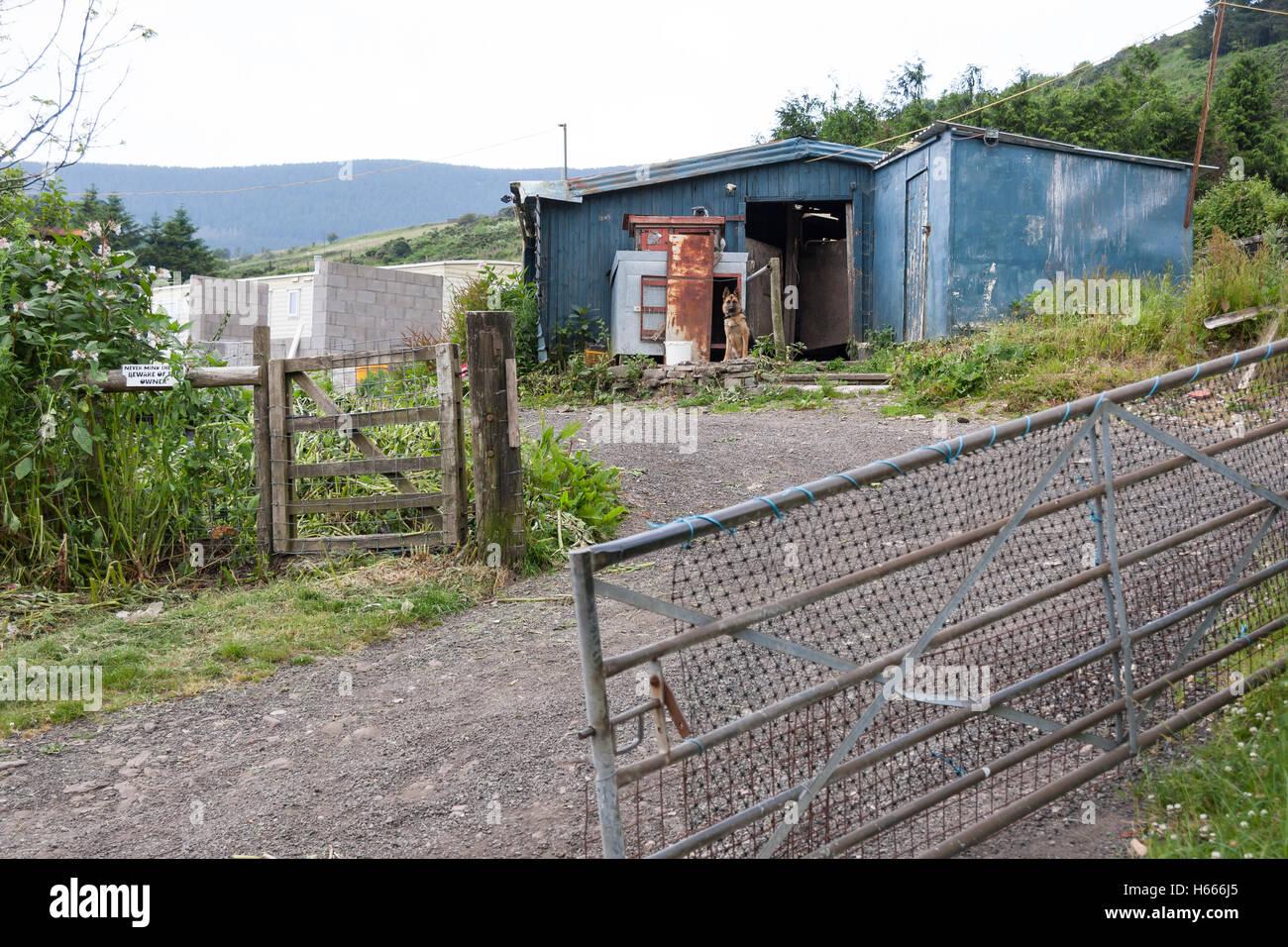 German Shepherd dog guarding shed - Stock Image