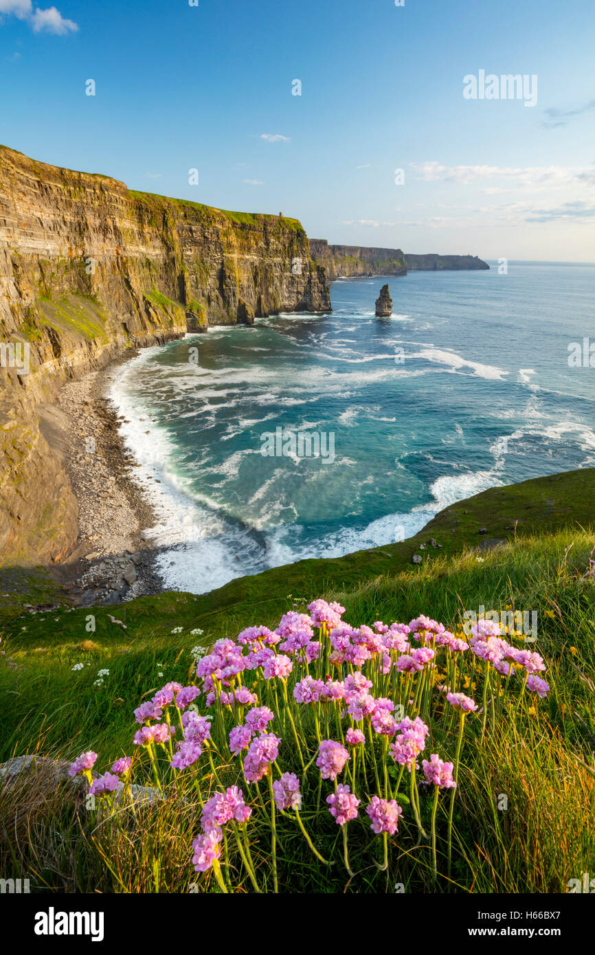 Coastal thrift beneath the Cliffs of Moher, County Clare, Ireland. - Stock Image