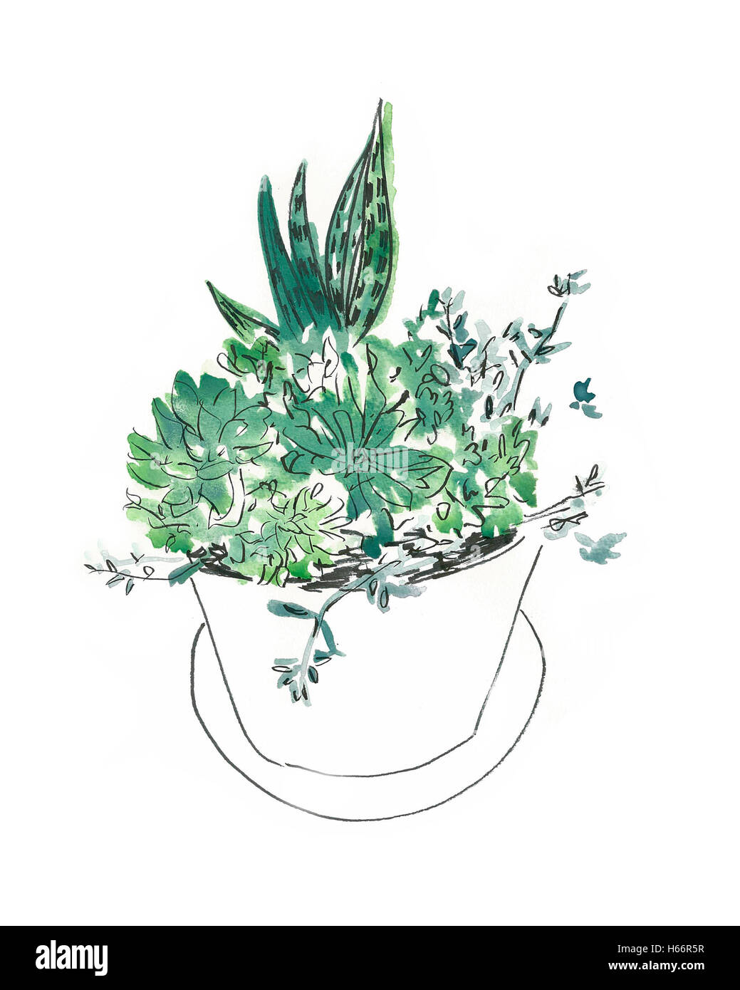 Plants in flower pot - Stock Image