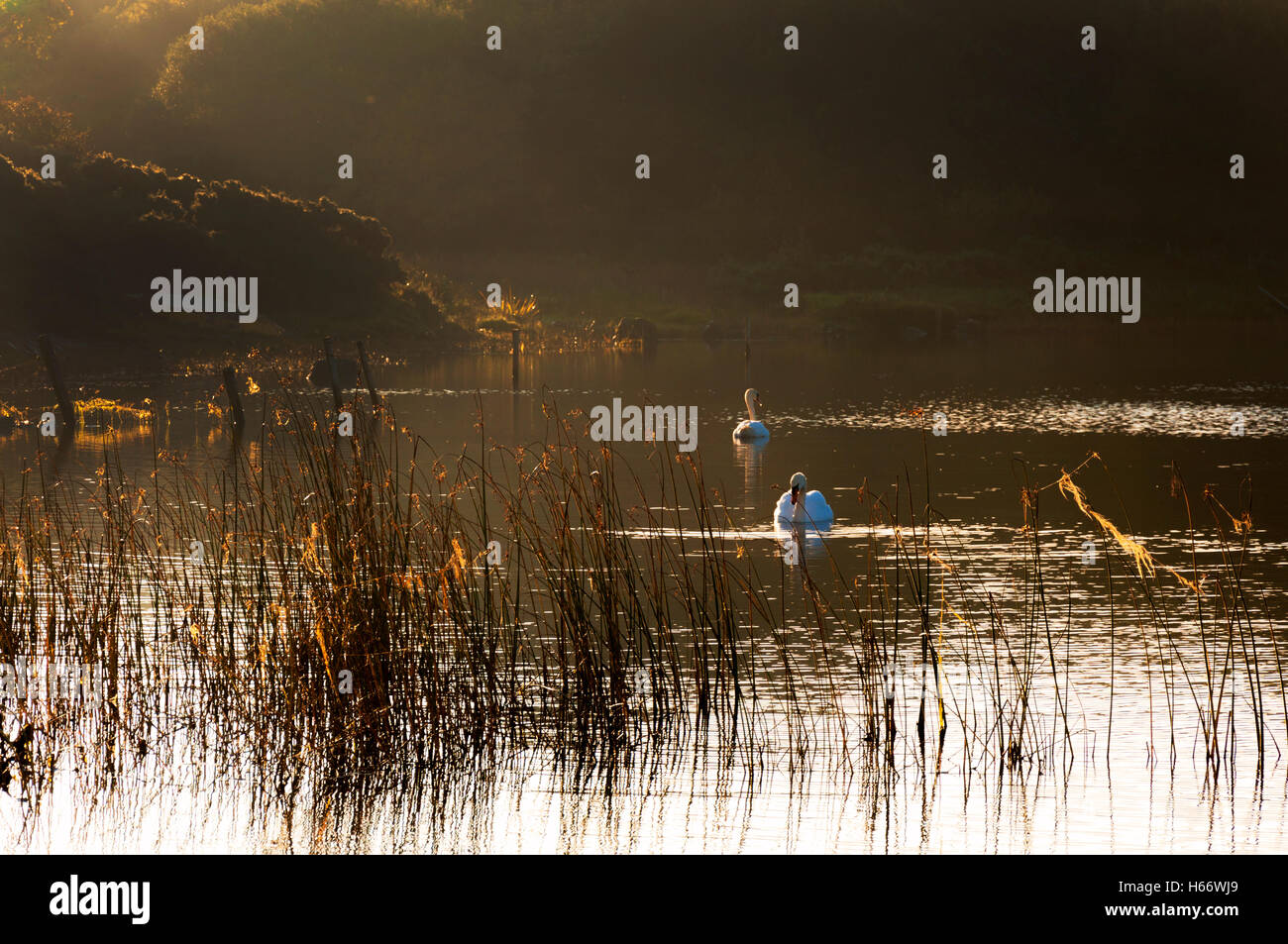 Autumn morning light on Lake Shanaghan, Ardara, County Donegal, Ireland - Stock Image