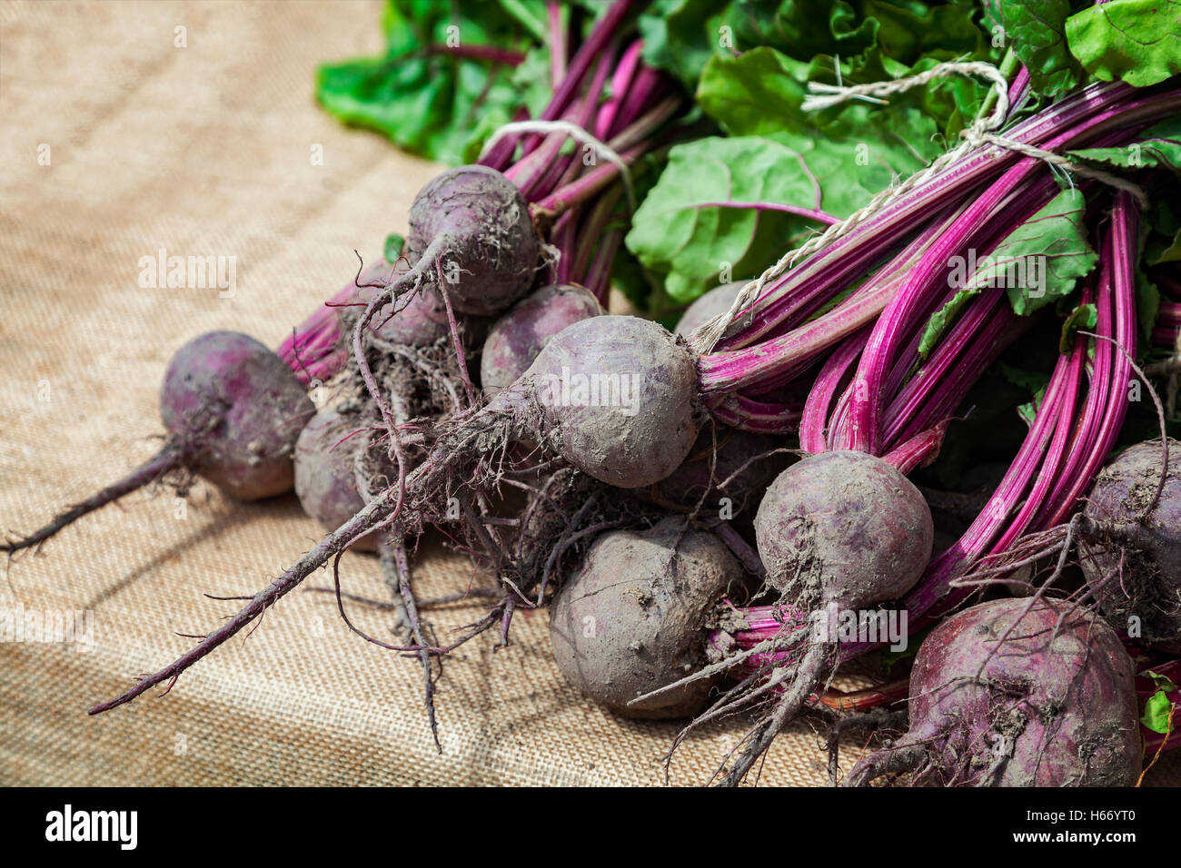 Image of fresh beetroot at farmers market.l - Stock Image