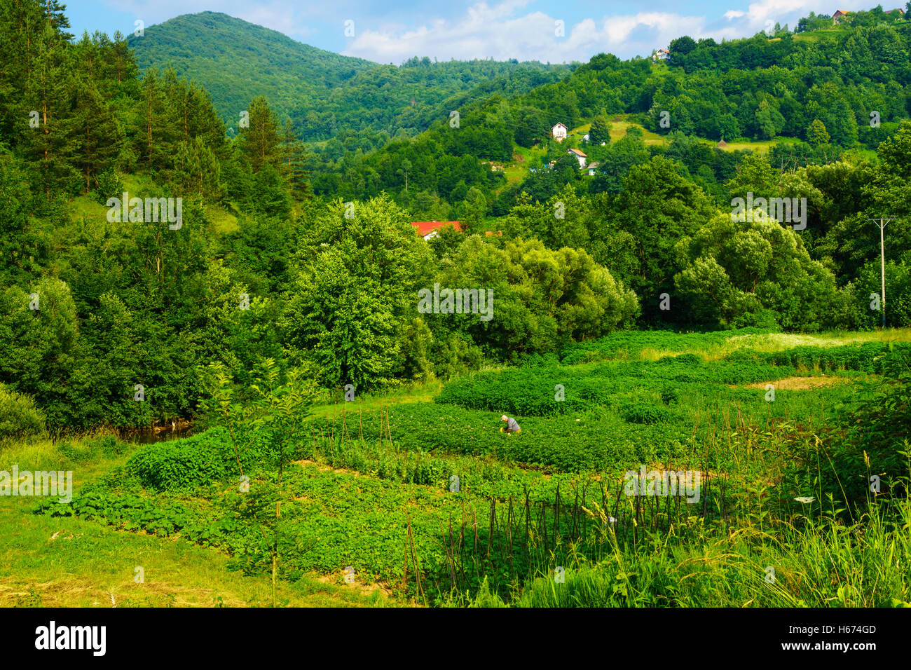 LUKAVAC, BIH - JULY 04, 2015: View and countryside, with a farmer, along the M18 road in the Republika Srpska, Bosnia - Stock Image