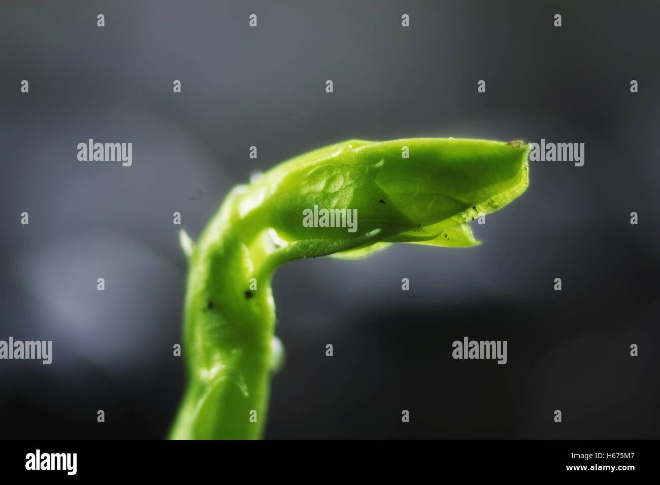 new seed green grass - Stock Image