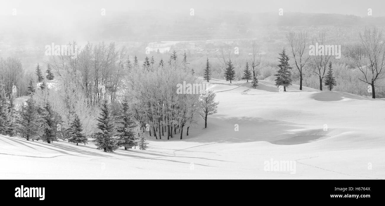 Monochrome Winter Wonderland Scene With Snow Covered