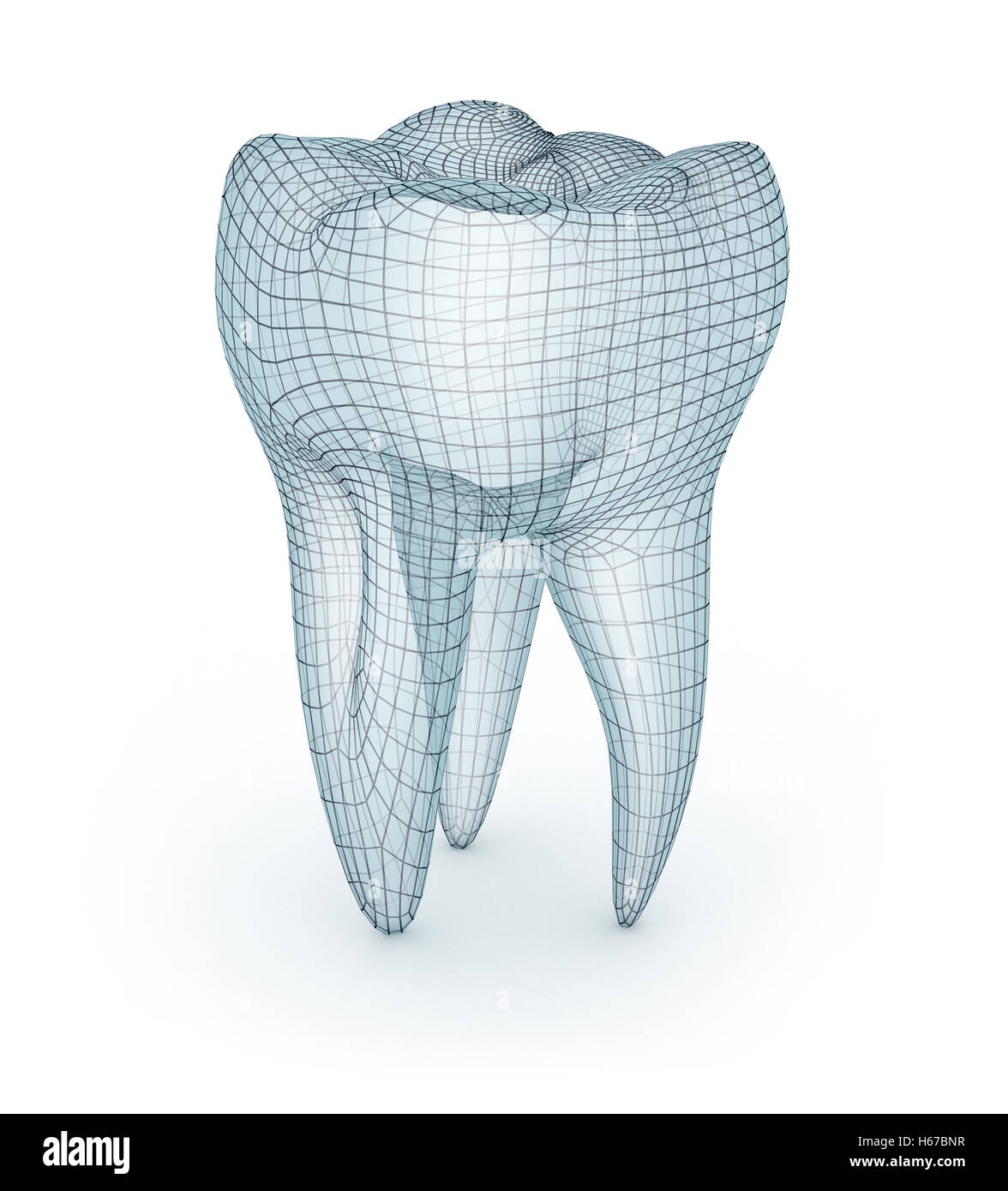 Human molar Tooth, wire model, 3d illustration Stock Photo ...