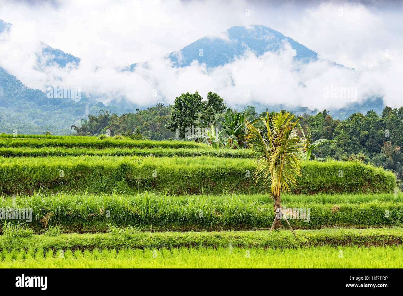 Rice Terraces and volcanic mountains on a rainy day in Jatiluwih, in Central Bali, Indonesia. Stock Photo