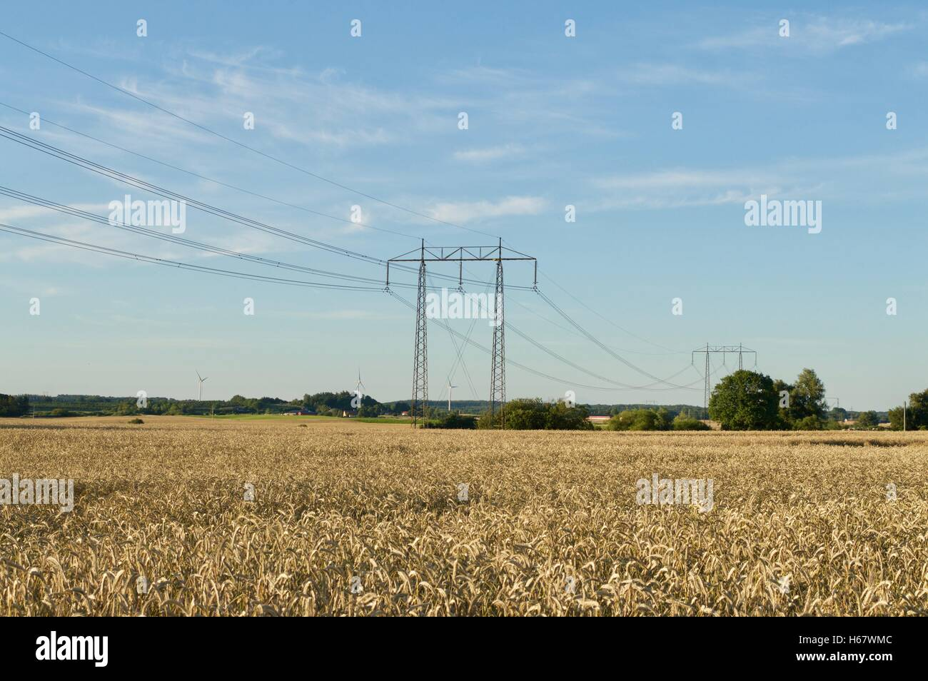Powerlines over a wheatfield - Stock Image