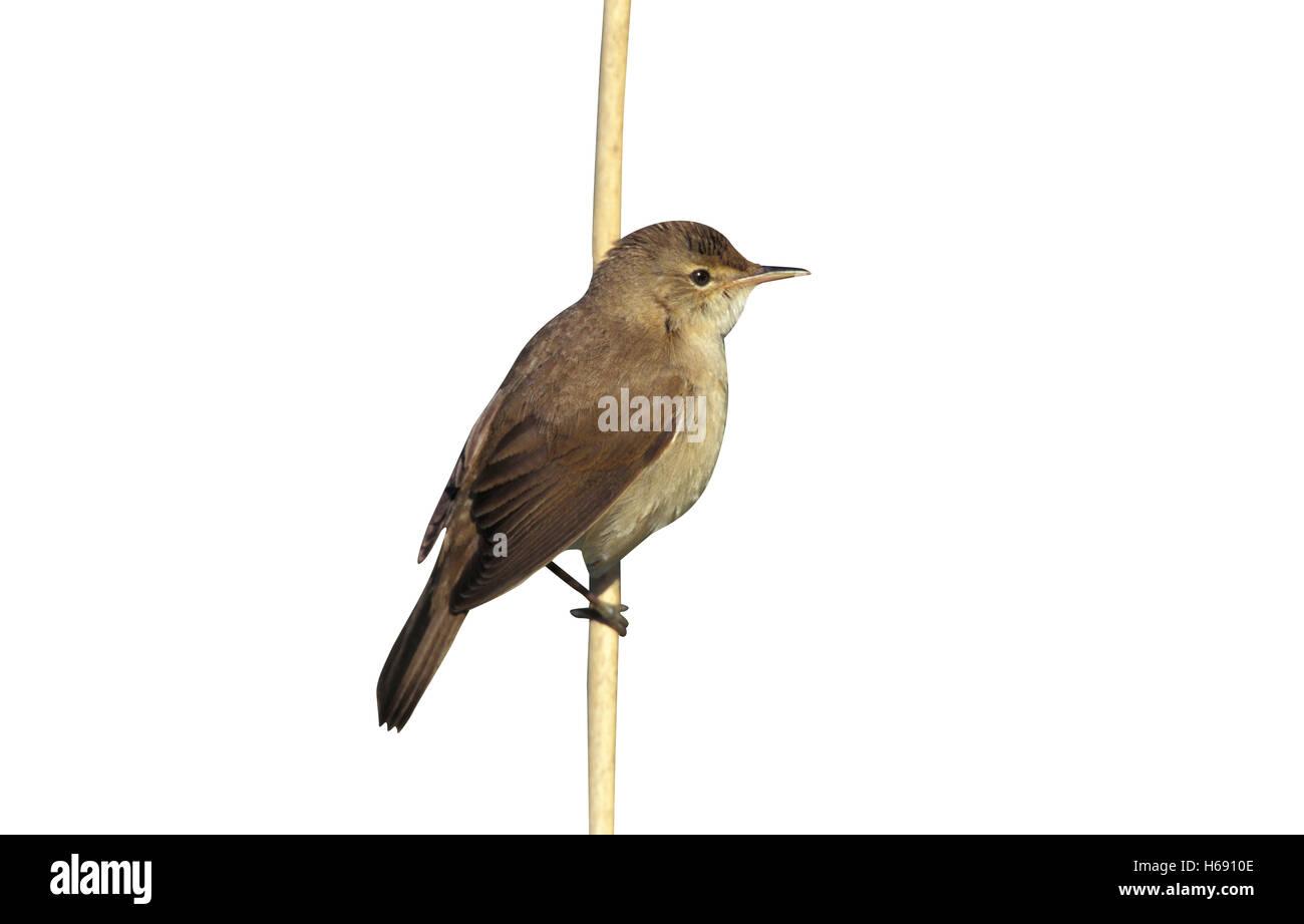 Bird Ringing Essex