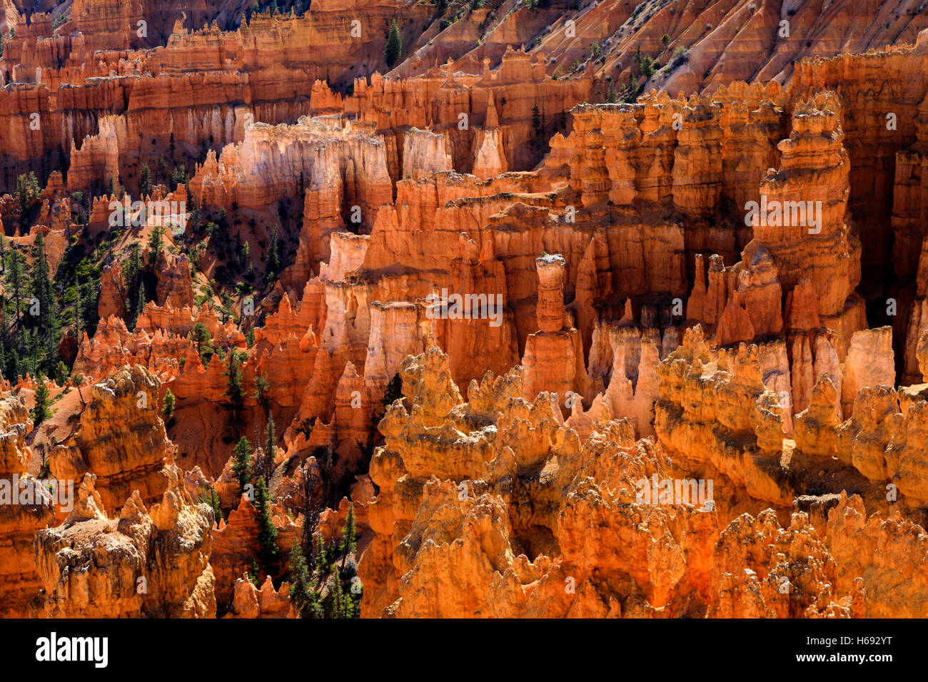 The sunlight makes the red rock formations glow as seen from the Sunset Point Overlook in Bryce Canyon National - Stock Image