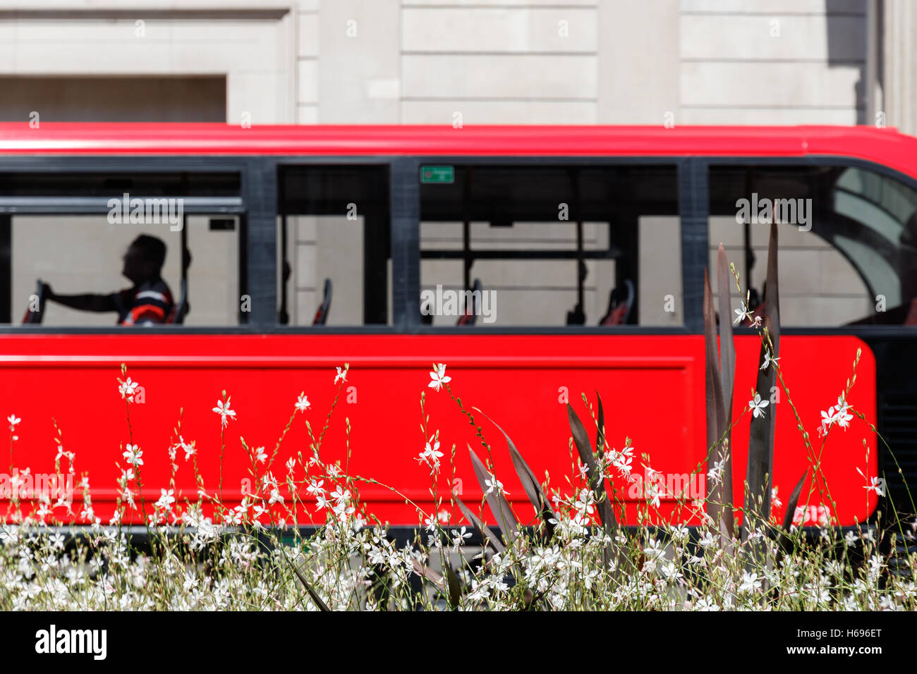 White flowers with a red double decker bus blurred in the background for concept use - Stock Image