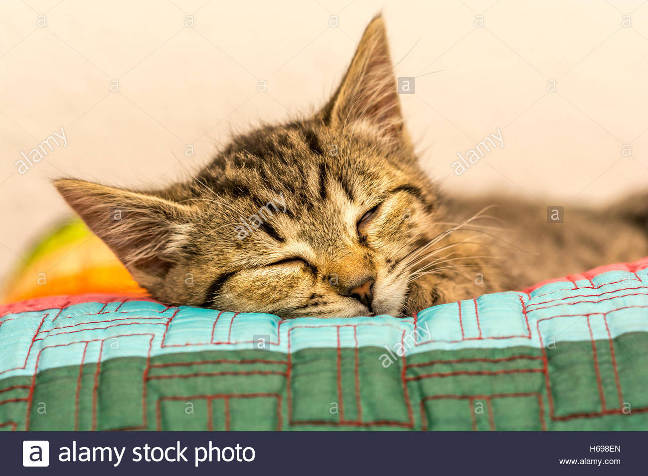 Little baby grey color kitty sleeping over a color pillow. it is very common to see these animals sleeping all over - Stock Image