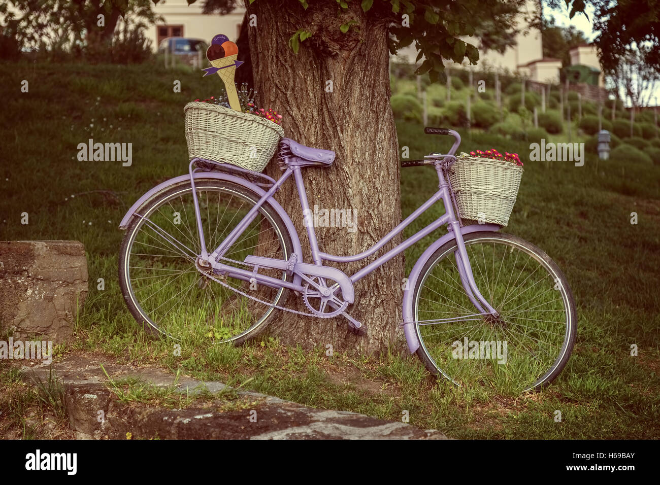 Old bicycle an old tree in Village Tihany of Hungary - Stock Image