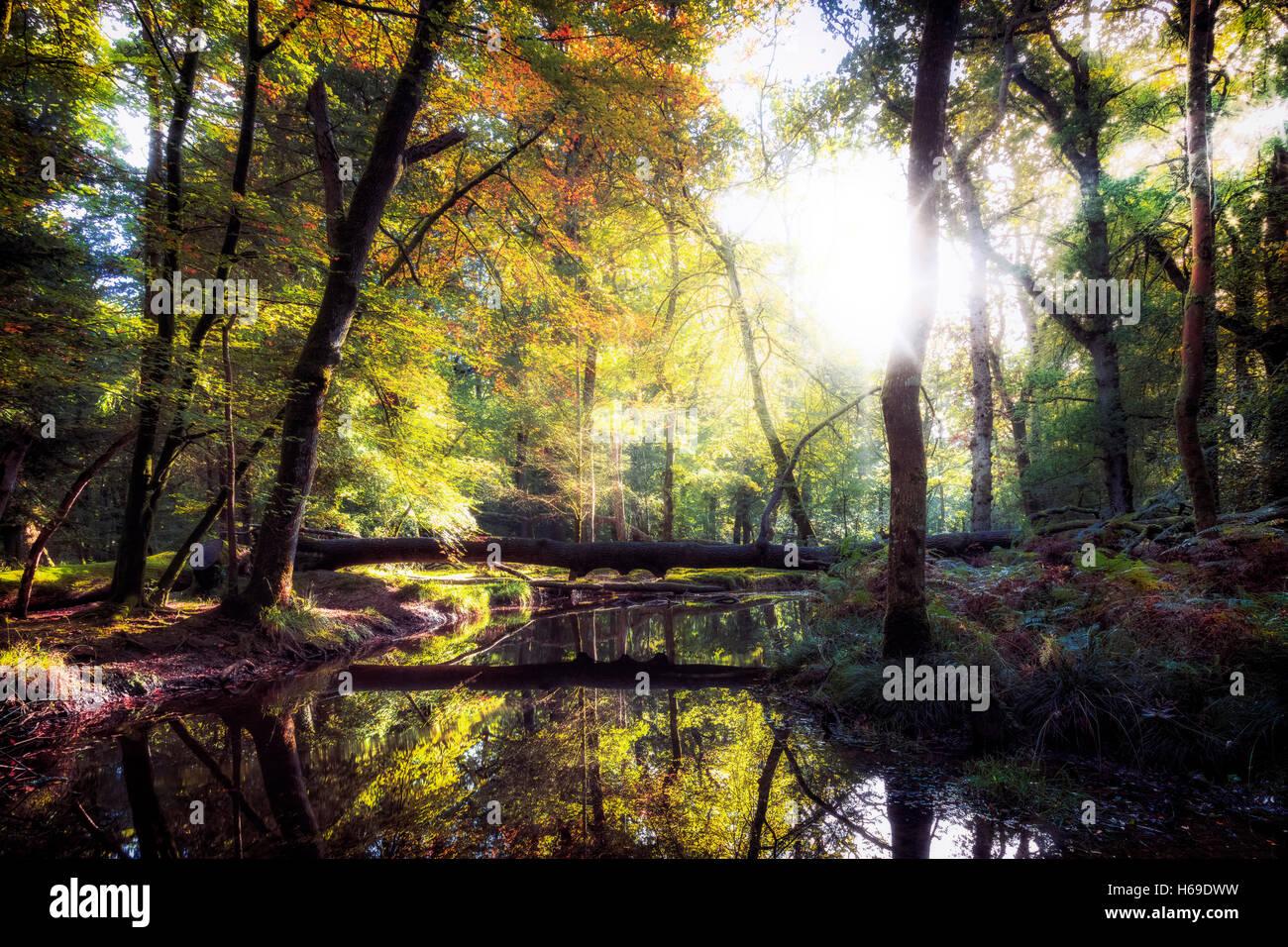 Blackwater, New Forest, Hampshire, England, UK - Stock Image