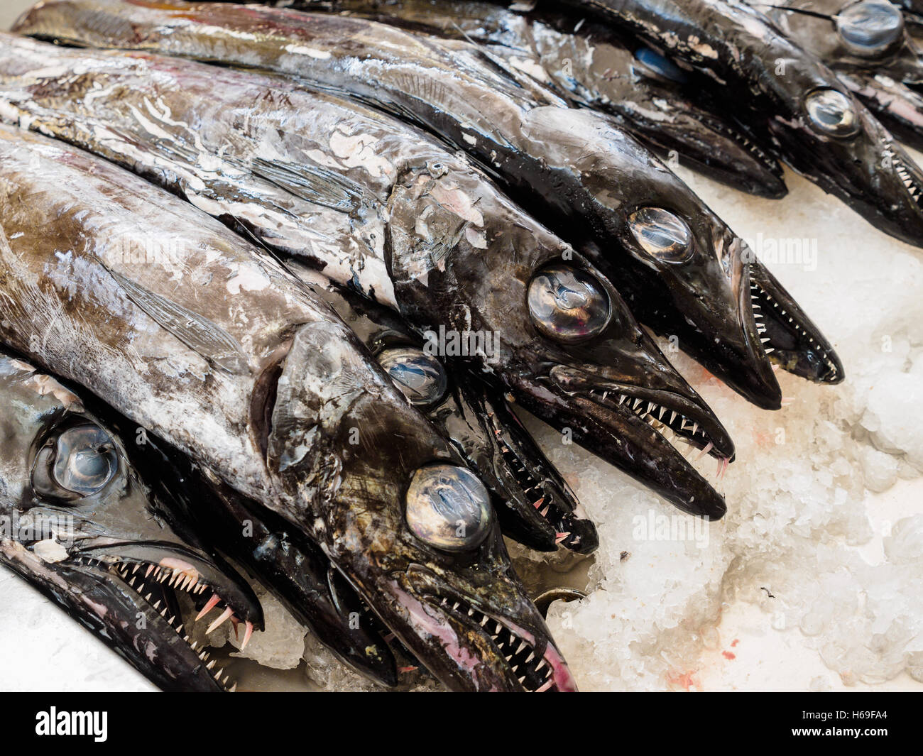 Black scabbardfish is for sale in the Funchal market hall on the Portuguese island of Madeira - Stock Image