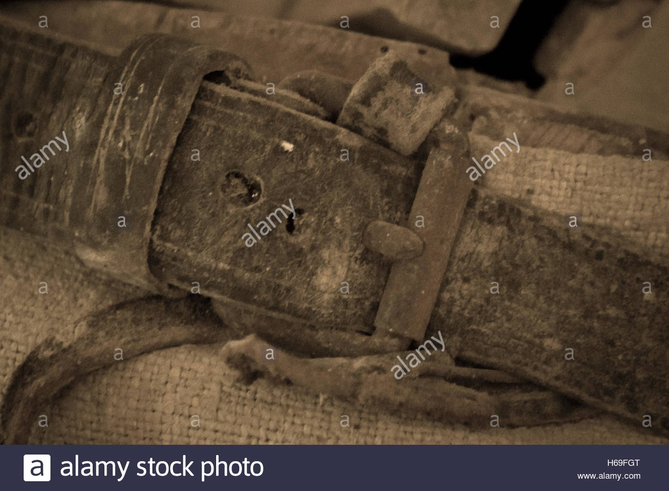 Old leather strap with buckle poorly maintained - Stock Image