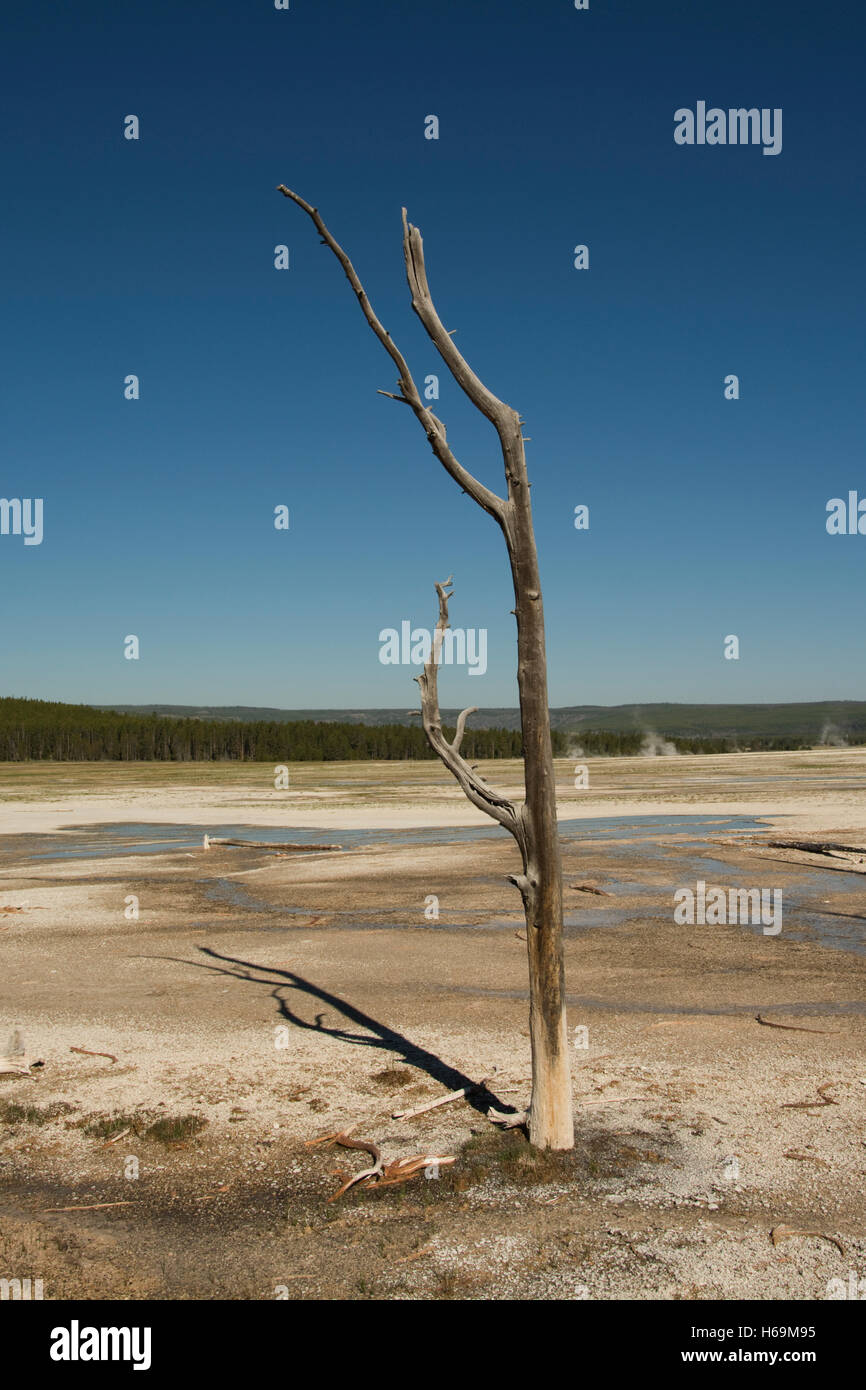 United States of America, USA, Wyoming, WY, Yellowstone National Park,  Fountain Paint Pots Trail, Celestine Pool, - Stock Image