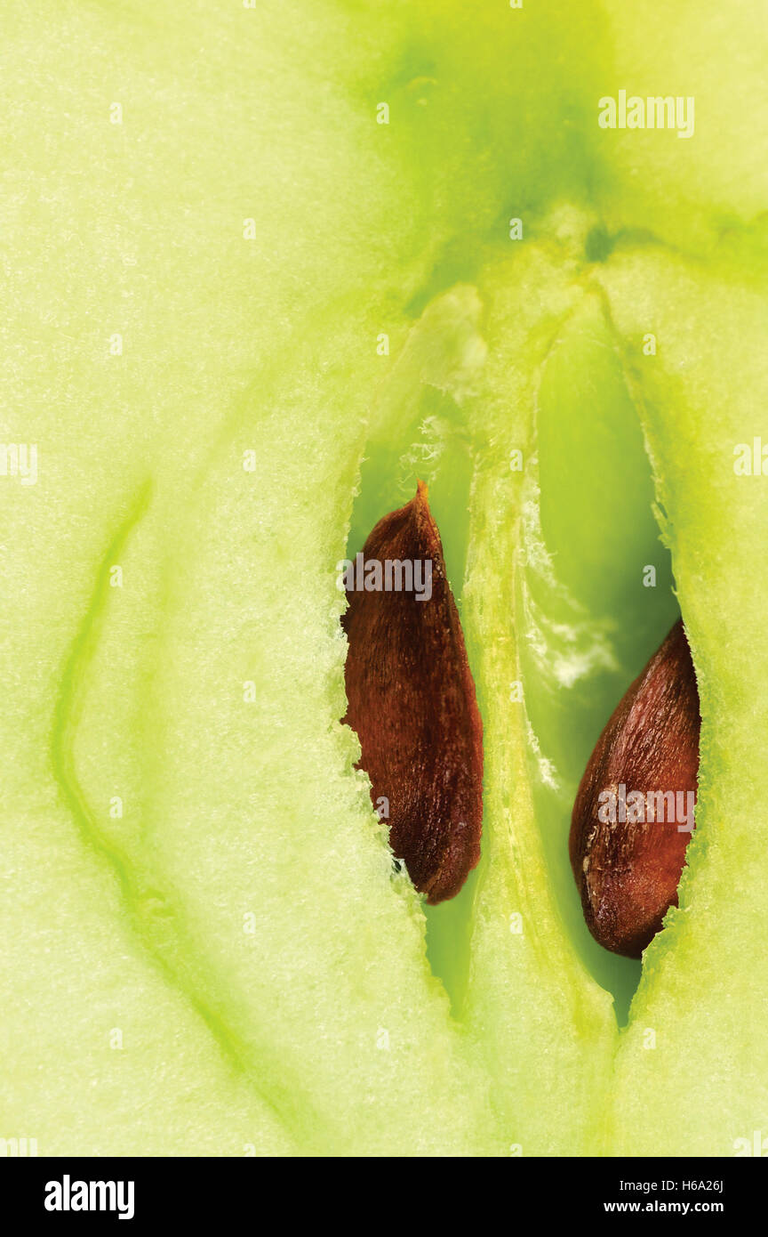 Apple half cut, green core and seeds, smith manzana macro closeup background - Stock Image