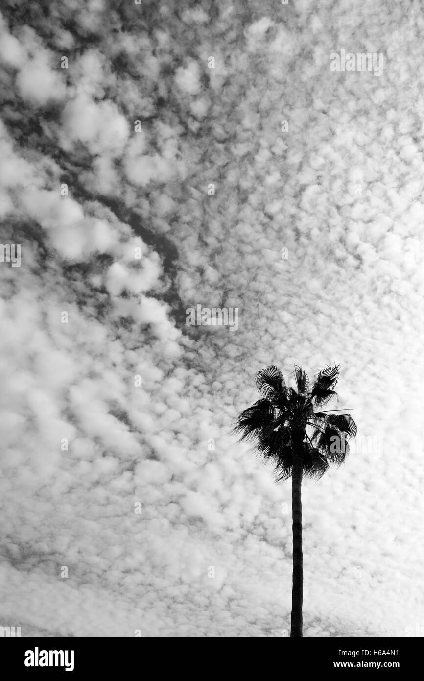 A palm tree silhouetted against a broken cloudy sky. Taken in black and white Stock Photo