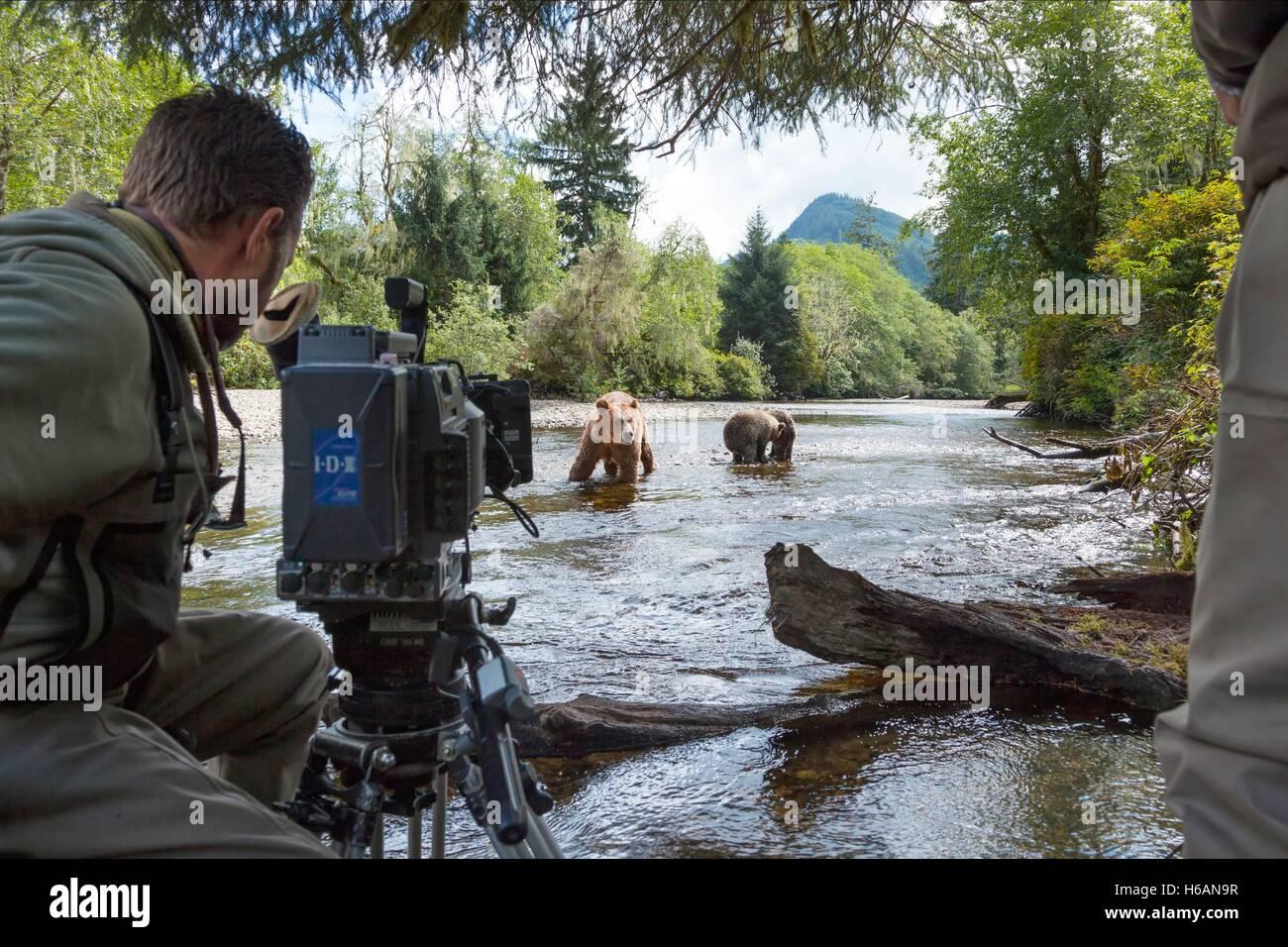 CAMERMAN FILMS BEARS BEARS (2014) - Stock Image