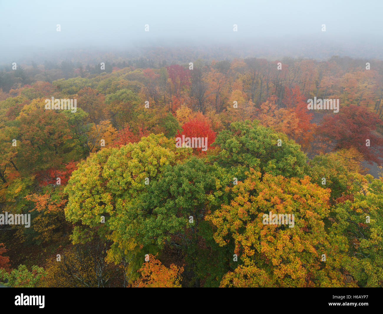 Aerial view fall nature scenery of colorful autumn trees in fog at Dorset, Muskoka, Ontario, Canada. - Stock Image