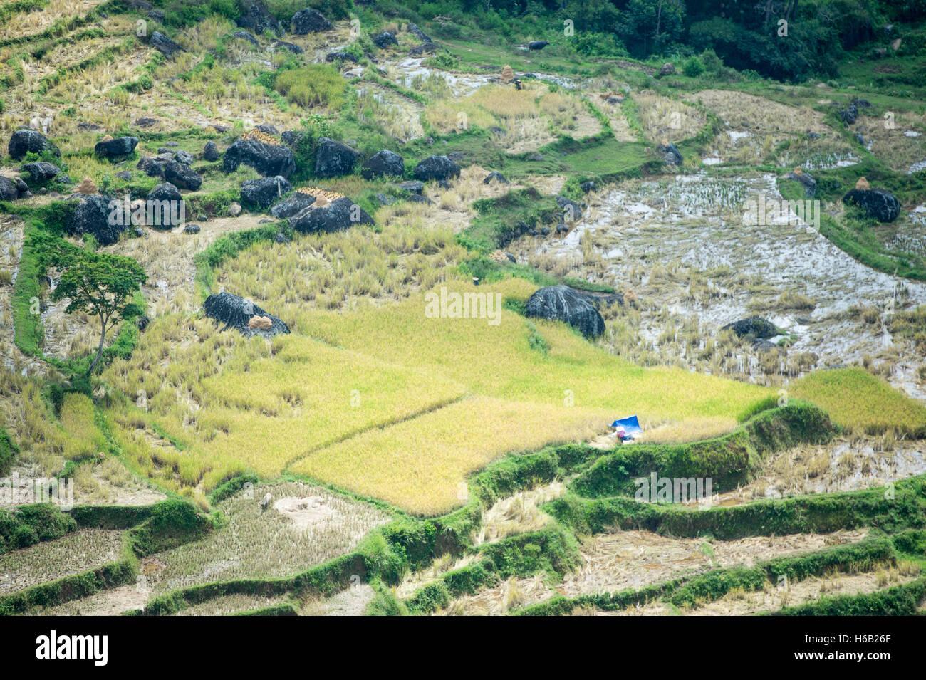 Paddy Field at North Toraja, Indonesia. - Stock Image