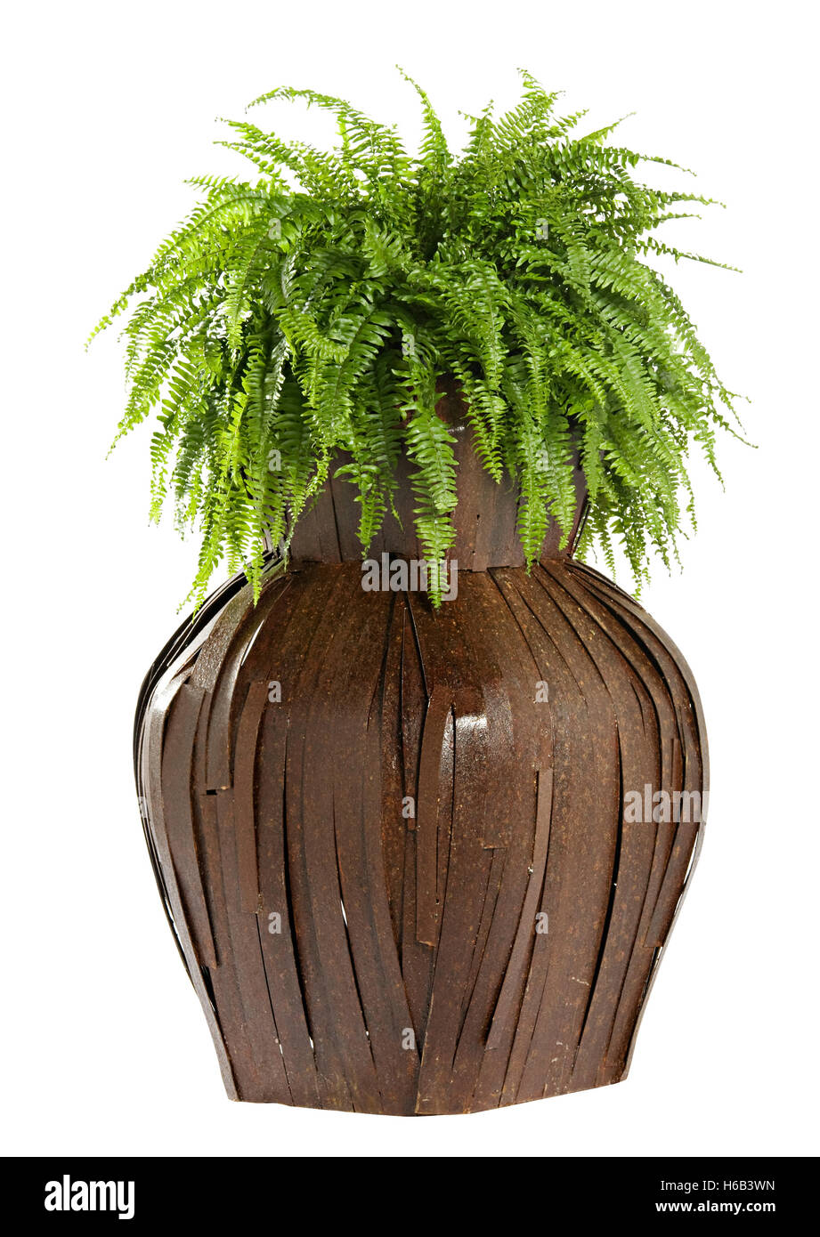 Interesting bulbous wooden flower box with a lush green fern growing in it isolated on white - Stock Image