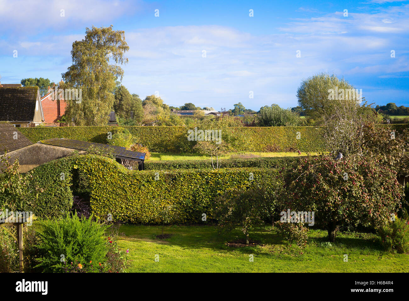 Country garden beech hedges trimmed in Autum ready for winter - Stock Image