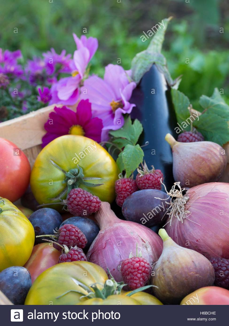 Fruits and summer vegetables crop (figs, raspberries, eggplants, tomatoes, oinons, plums) - Stock Image